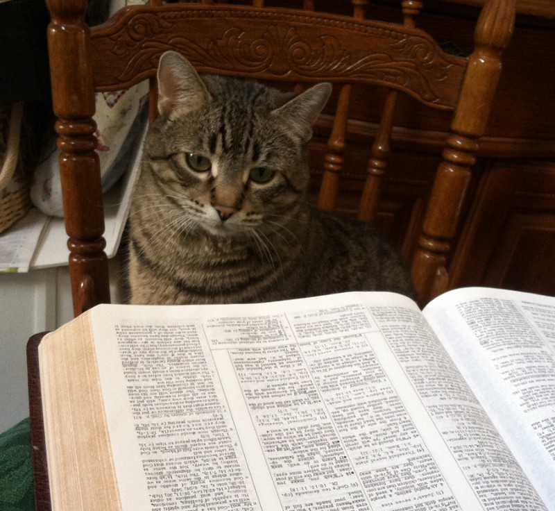 Franzie reading Bible